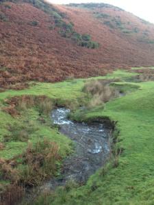 Sparkle walk stream